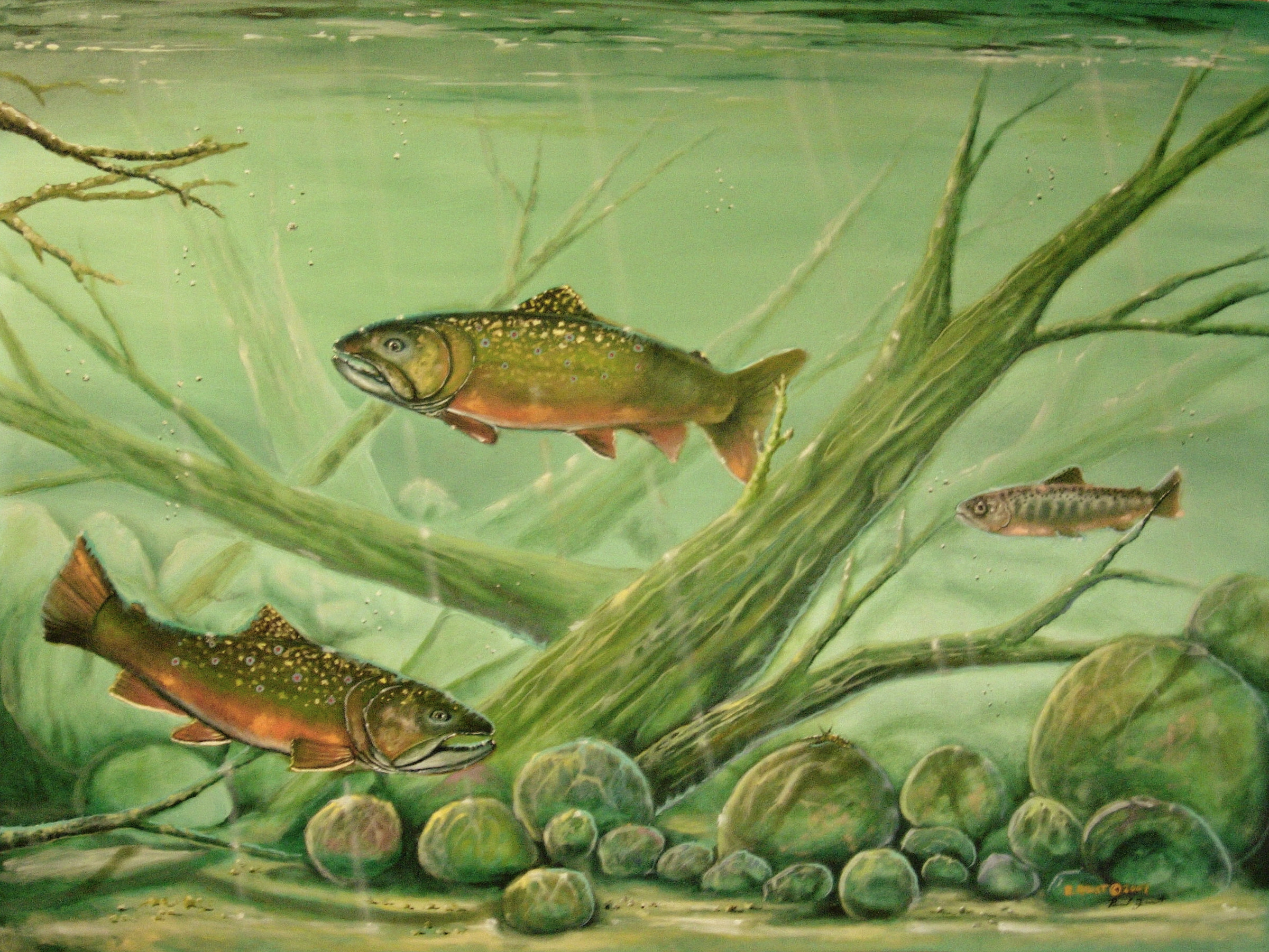 Largemouth Bass Art Prints